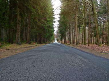 country road into forrest
