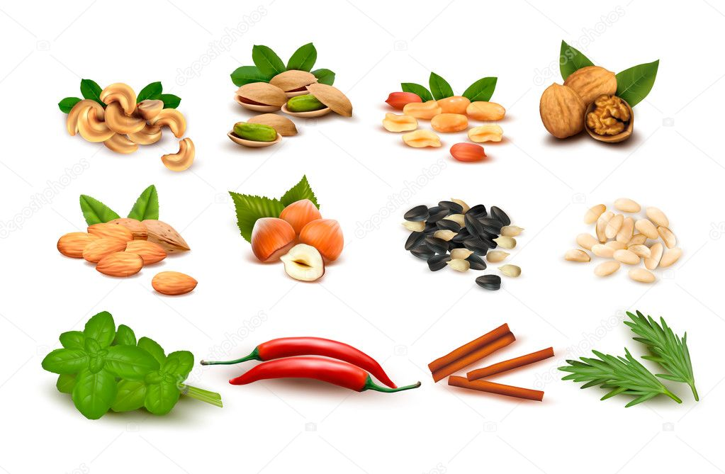 Big set of ripe nuts and seeds and spices Vector
