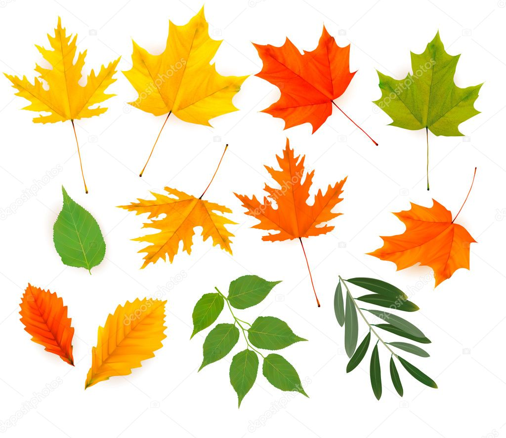 Set of colorful autumn leaves. Vector.