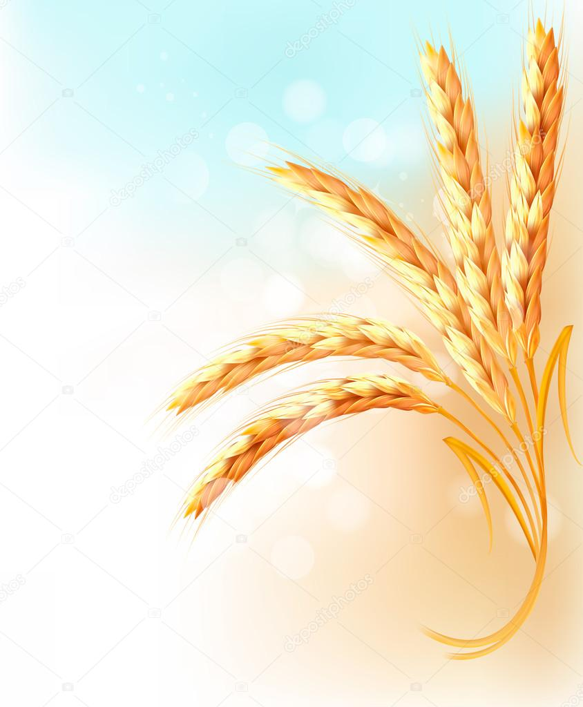Ears of wheat in front of blue sky. Vector illustration.