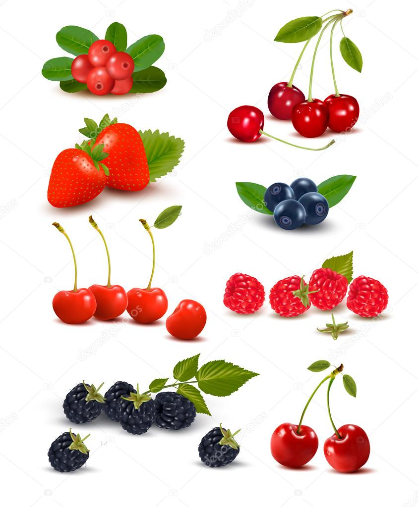 Big group of fresh berries and cherries. Vector illustration.