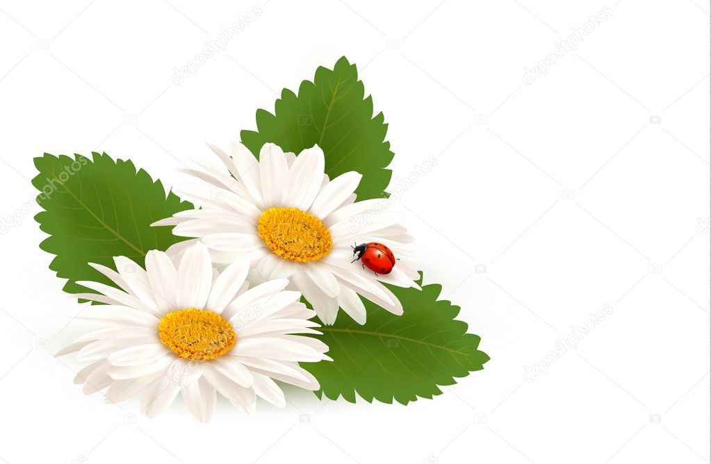 Nature summer daisy flower with ladybug. Vector illustration.