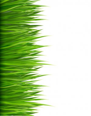 Nature background with green grass. Vector. stock vector