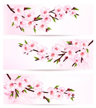 Three sakura branch banners. Vector.