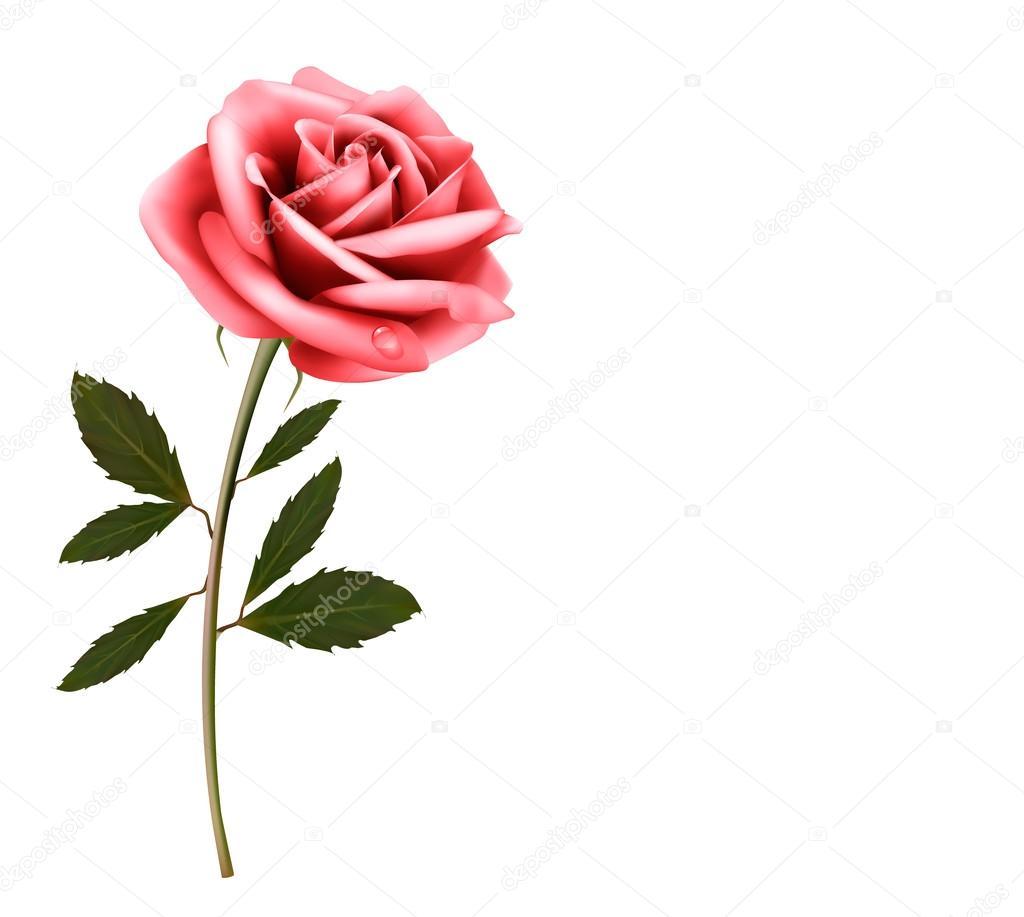 Immagini Rosa Rosa Vector Sfondo Fiore Con Una Rosa Rosa Vector