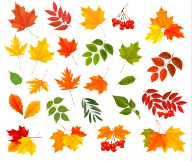 Set of colorful autumn leaves. Vector illustration. stock vector