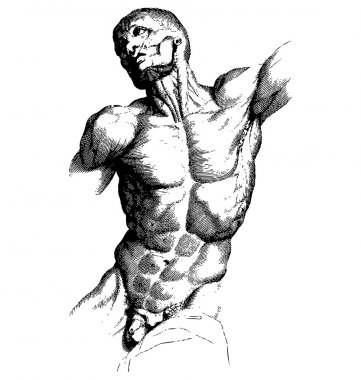 Male Torso Engraving