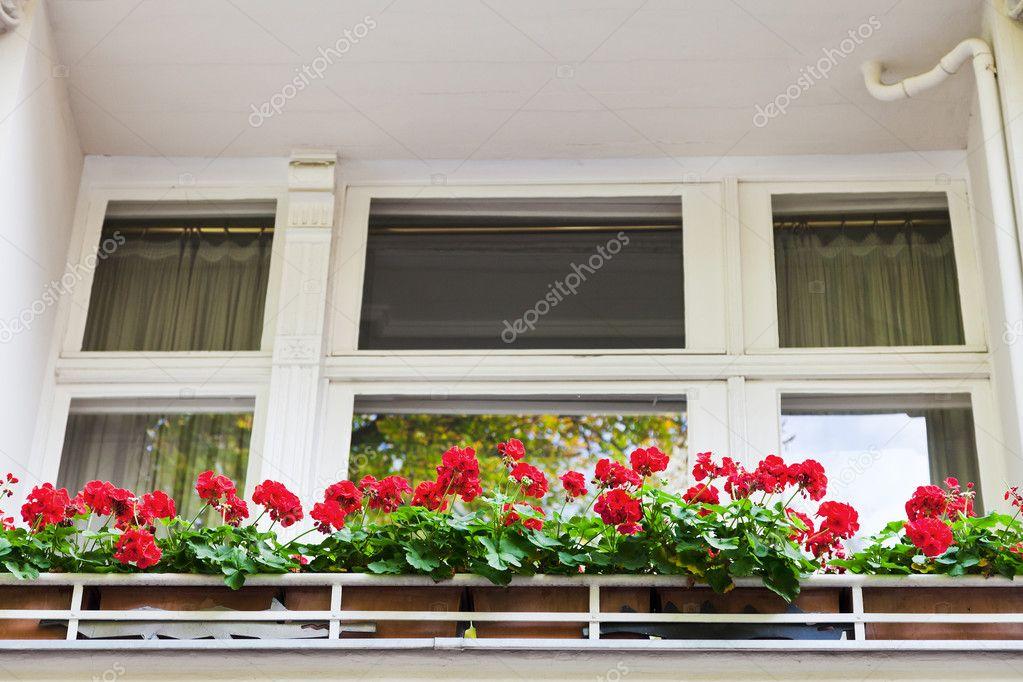 Фотообои на заказ - красные цветы на балконе дома в берлине .