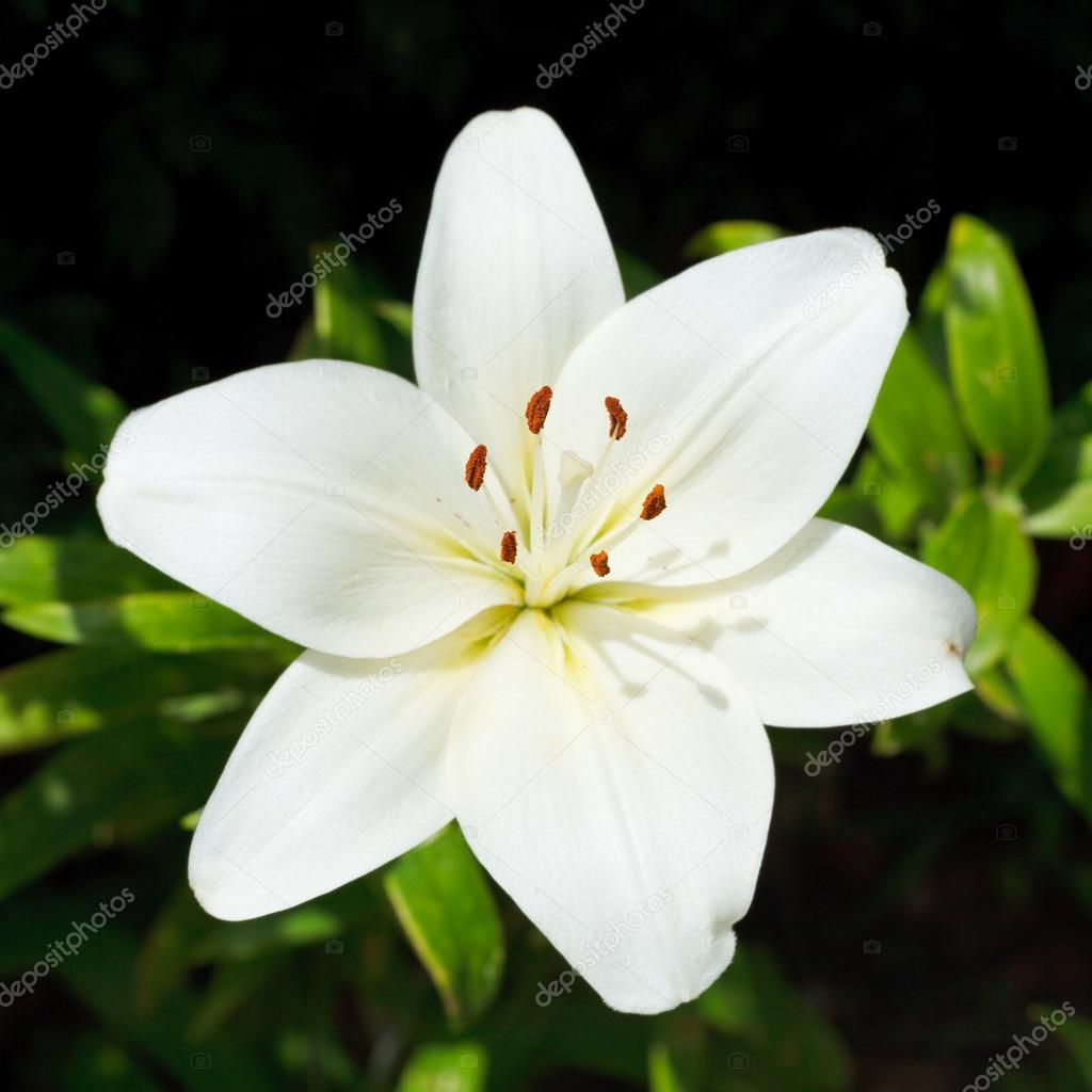 Фото белый цветок