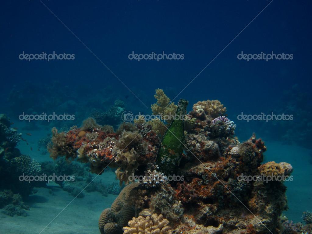 Korallreven rensas