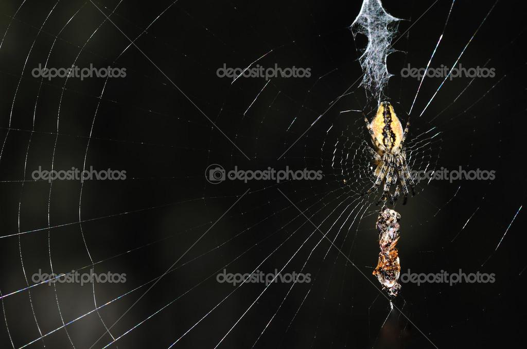 Spindeln i natet