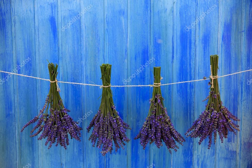 Lavender herbs drying on the wooden barn in the garden