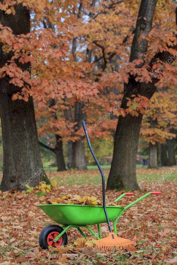 Autumn leaves in wheelbarrow