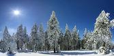 zimní stromů v Beskydech, Polsko