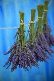 Fotografie levandule bylinkami sušení na dřevěné stodoly v zahradě