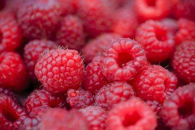 Raspberry, fruits - fresh raspberries from garden