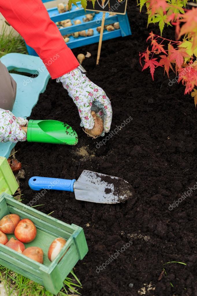Gardening, planting, flowers bulbs - woman  planting tulip bulbs