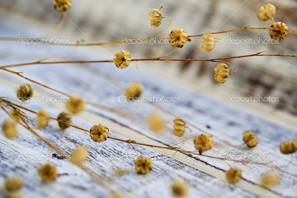 Flax after flowering on  wooden table