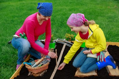 Gardening - sowing seeds to the soil