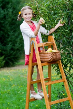 Orchard, fruits - lovely girl picking ripe pear