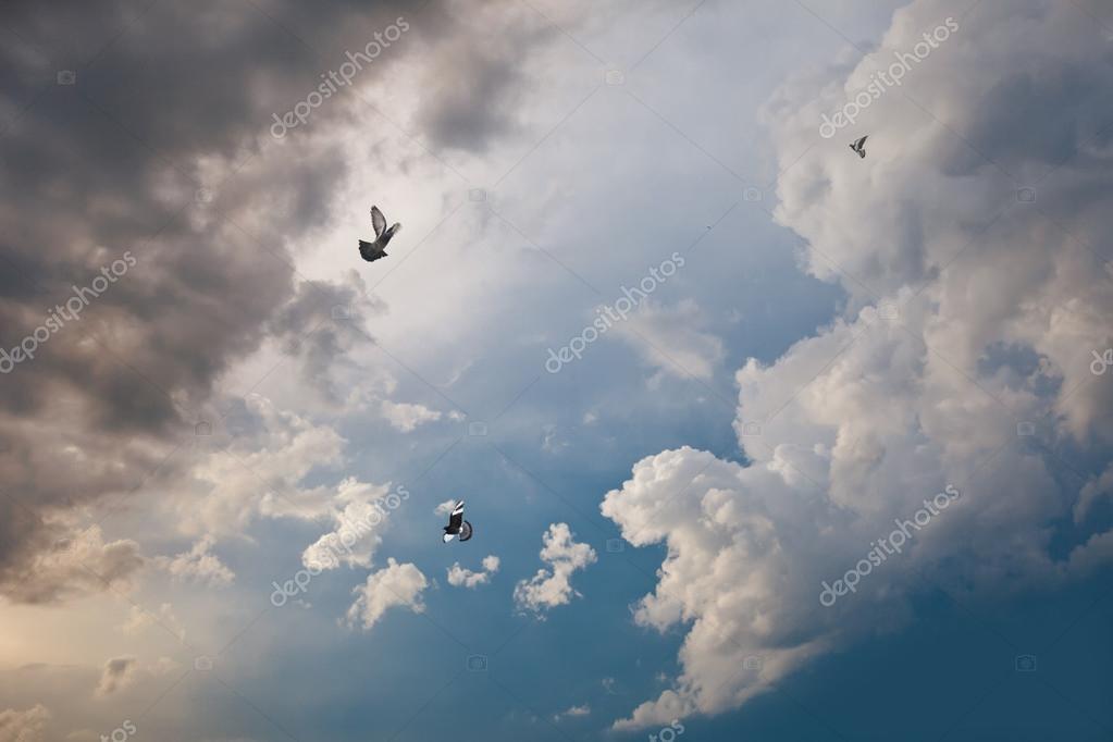 Doves in the sky