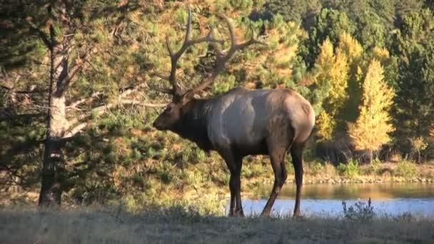 bika elk