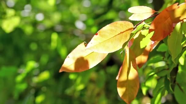 žluté listy na slunci