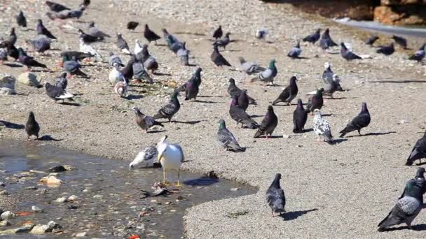 The seagull tears off pieces of meat from drop