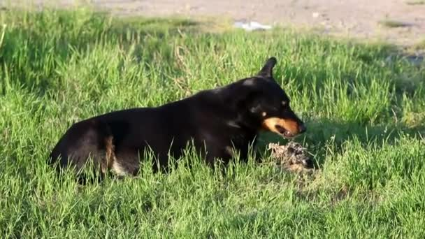 der Hund nagt Essen auf dem Gras