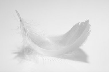 Gray feather.