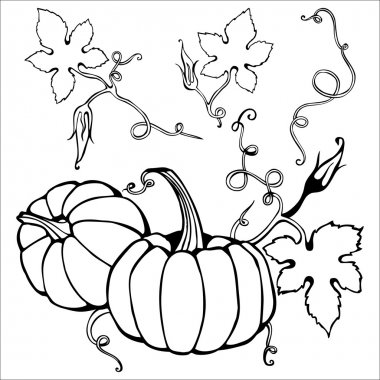 Hand drawn pumpkin and creepy plant elements