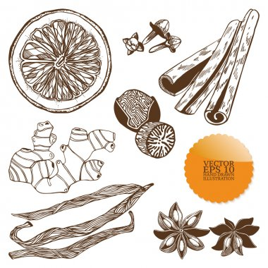 Vector set of hand drawn spices