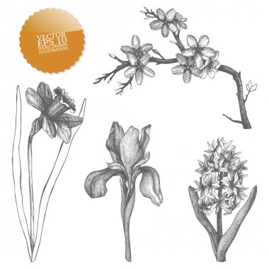 Vintage collection of vector hand drawn spring flowers isolated on white