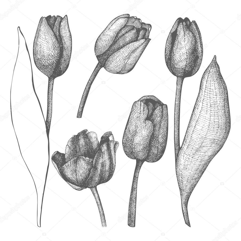 Seamless vector tulip pattern