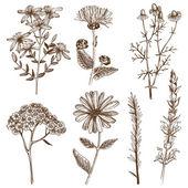 Füvek és növények