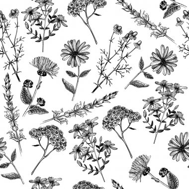 Hand drawn herbs and plants