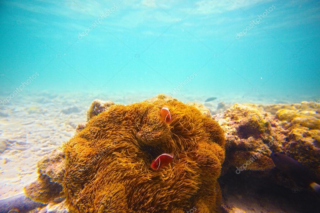 Corals, clownfish and palm island - half underwater shoot. Thail