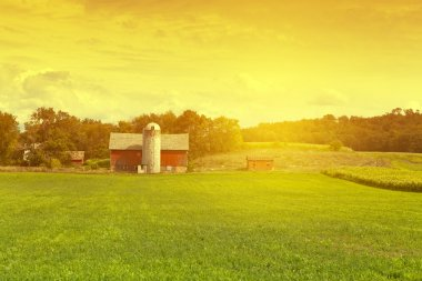 American Farm in hot summer day