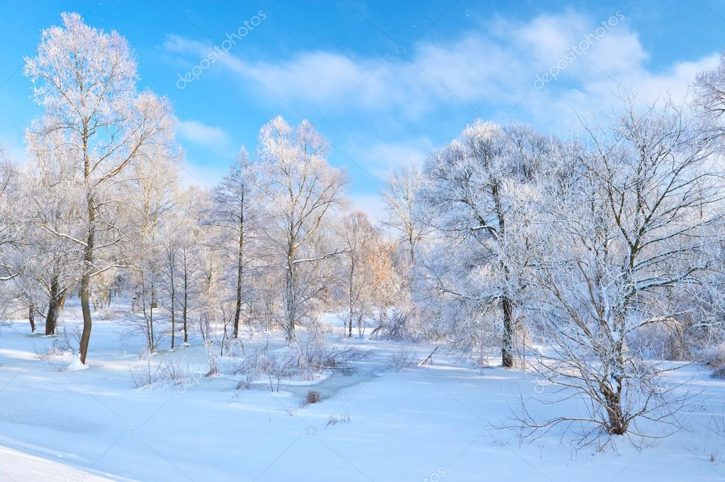 Beautiful snowy landscape by the Narew river valley.