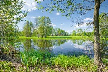 The Narew River Scenery. Nature reserve.