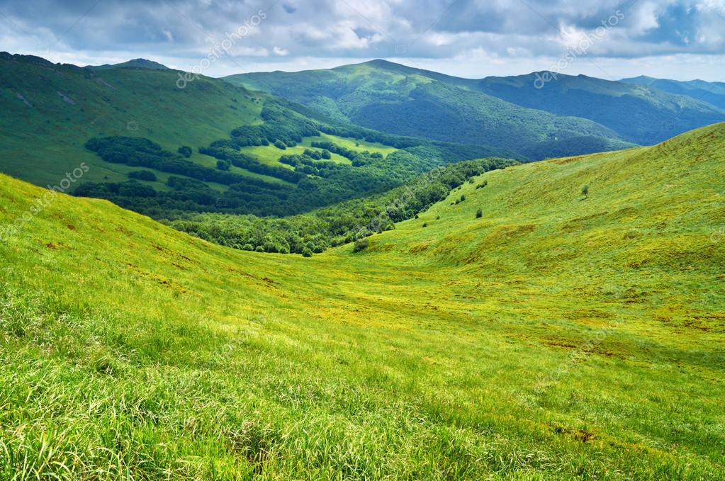 Grassland and forest in Carpathians. Mountains landscape.
