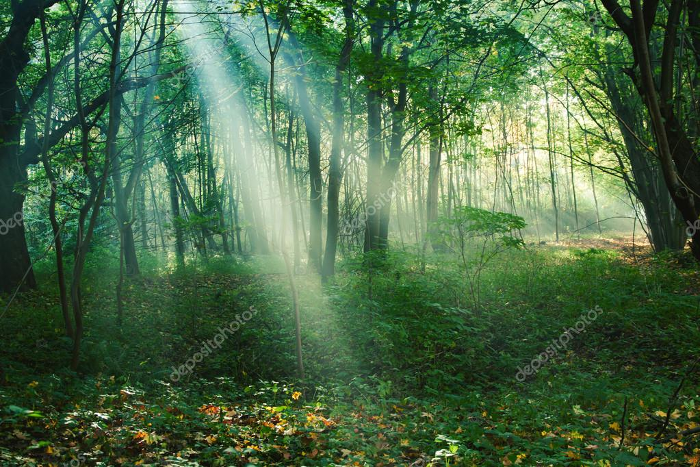 Фотообои Sun rays between trees in forest