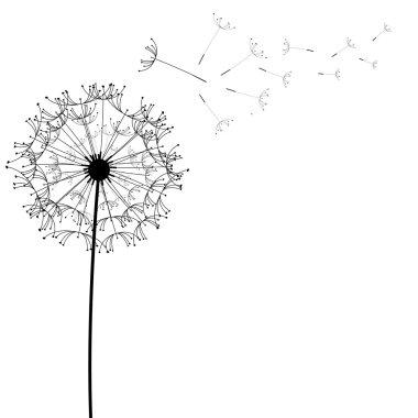 Dandelion flower desing design