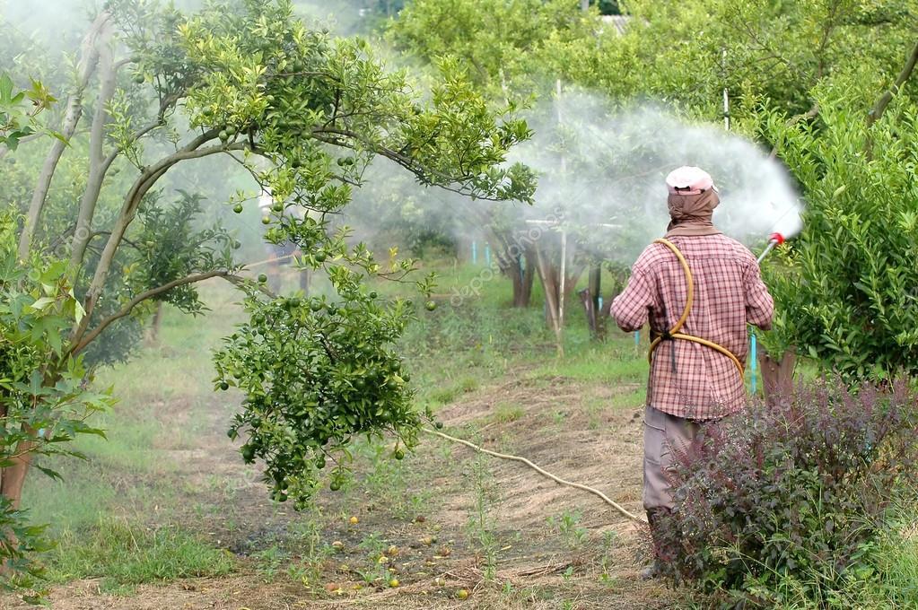 Farmer spray pesticide