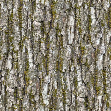 Bark. Seamless Texture.
