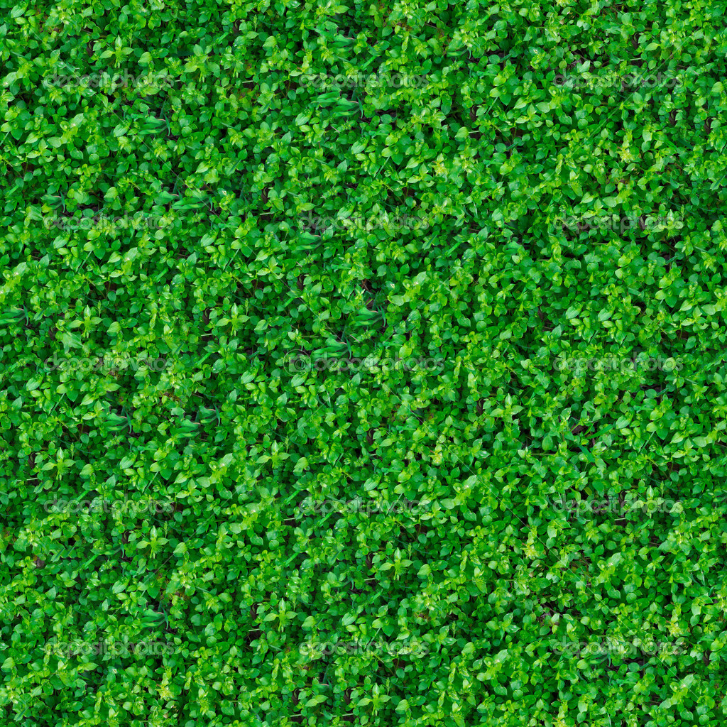Trama senza soluzione di continuit erba del prato verde for Prato verde