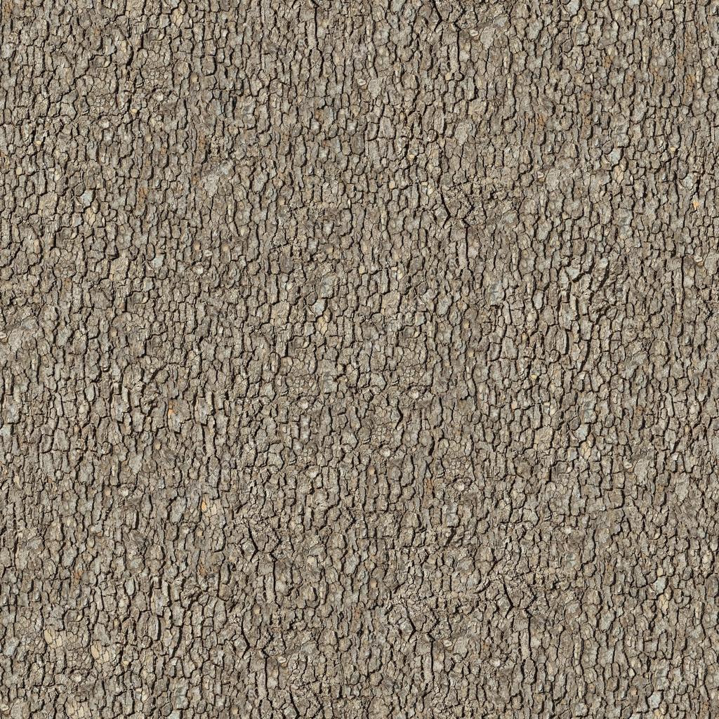 elm bark seamless tileable texture stock photo tashatuvango