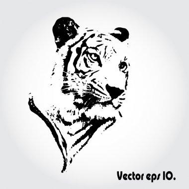Tiger sketch.