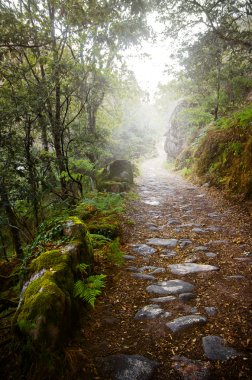 Rocky trail in the foggy forest