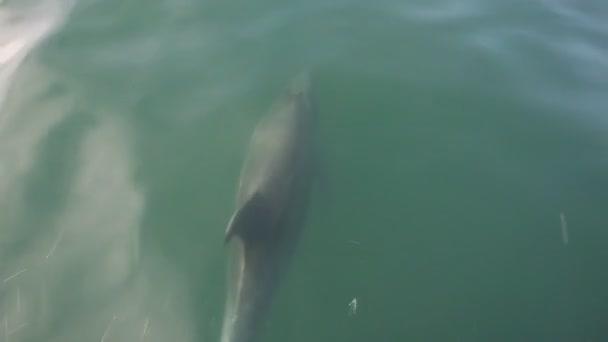 Delfinek a Velence beach, Los Angeles, California